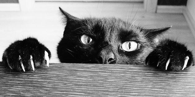 Was uns Katzen über Social Media Marketing beibringen können